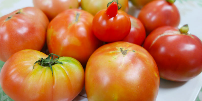 フードバンク関西のが回収したトマトの写真